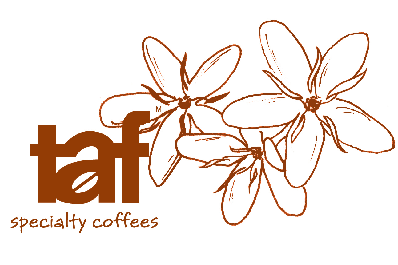 Taf Coffee, Catering Supporter
